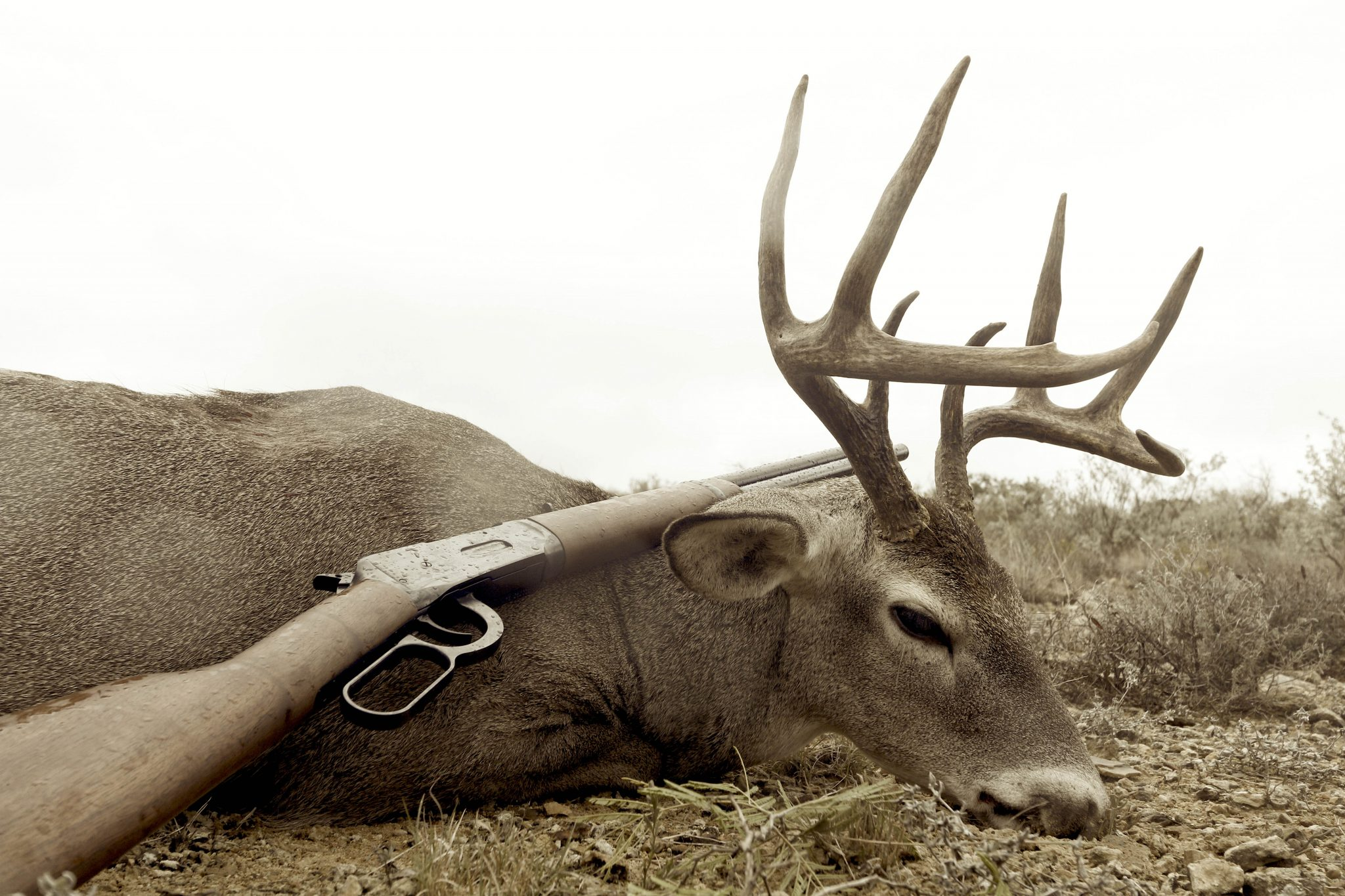 Born To Hunt and Buck Insured to Stay That Way