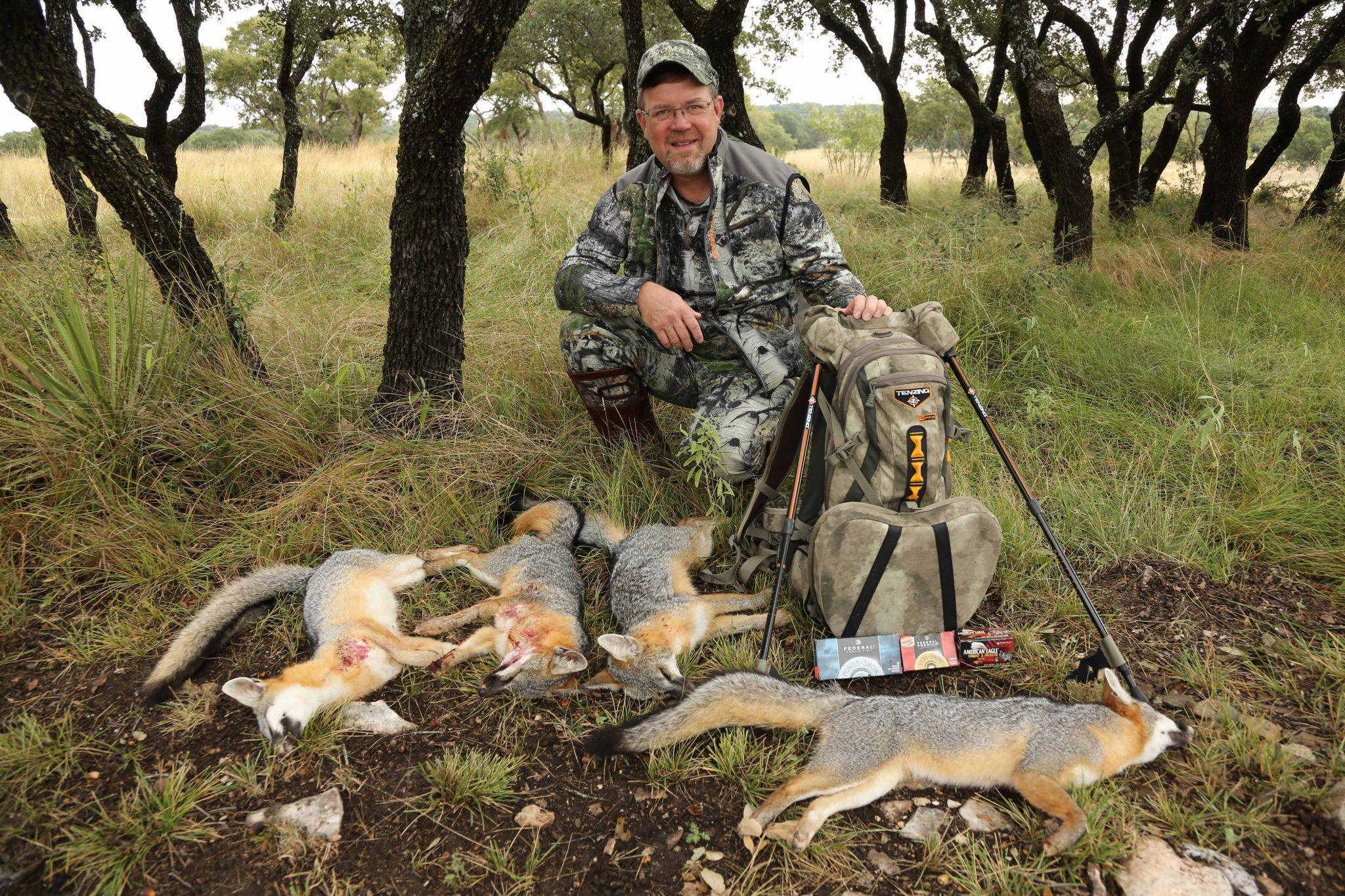 Gray Fox Aplenty